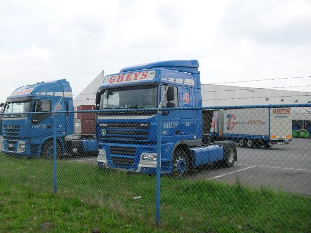 DAF XF      Iveco.
