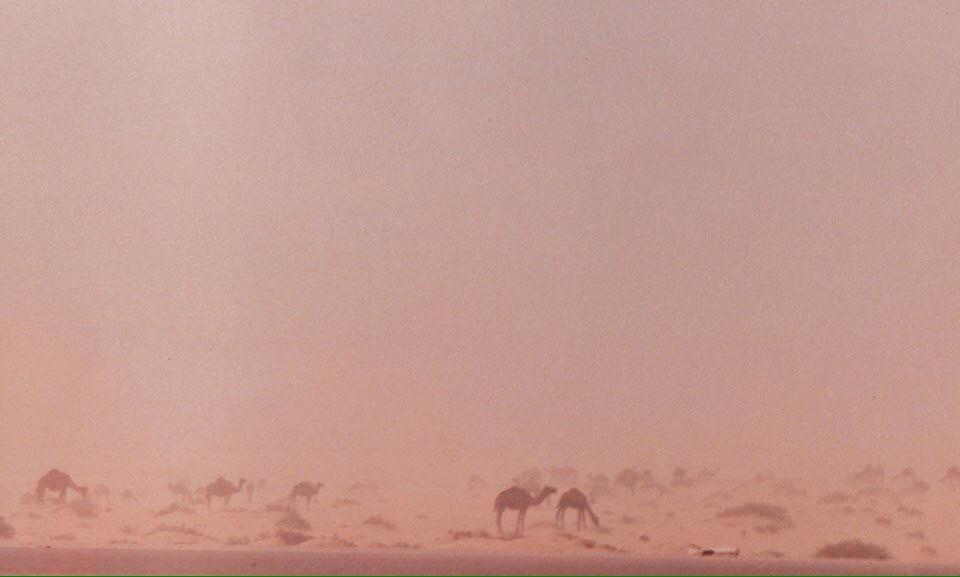 Woestijnwind