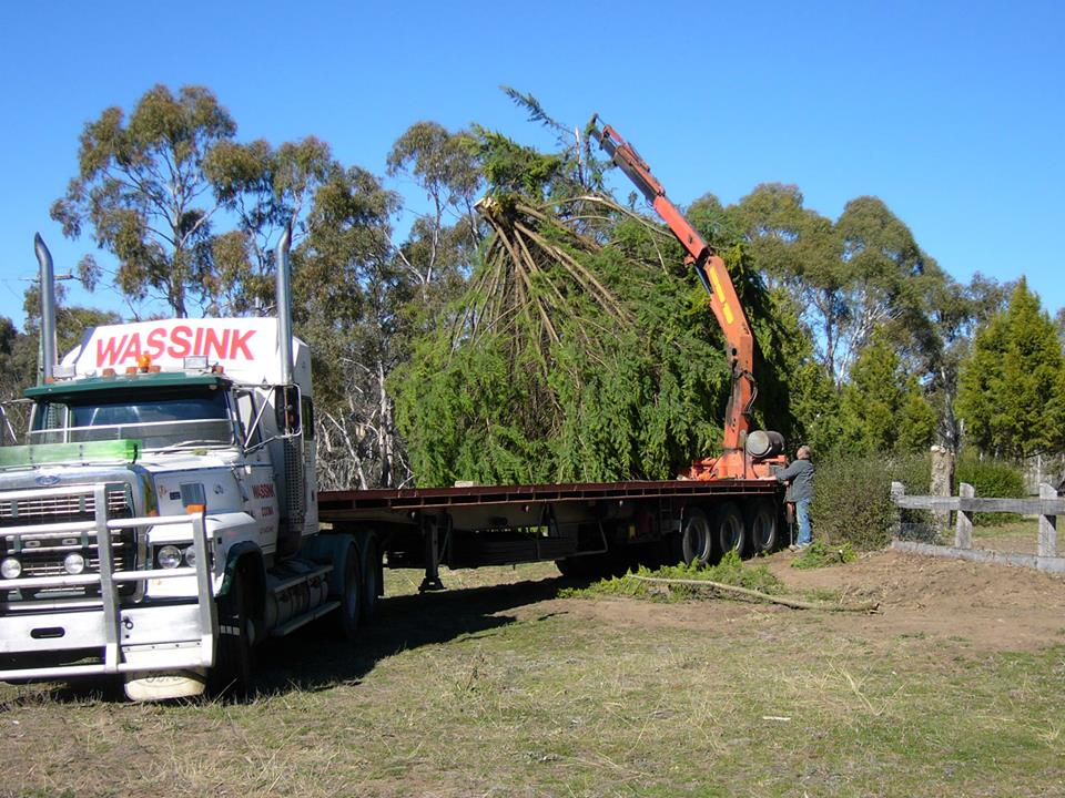 Removing-tree-out-of-our-front-yard-in-Cooma