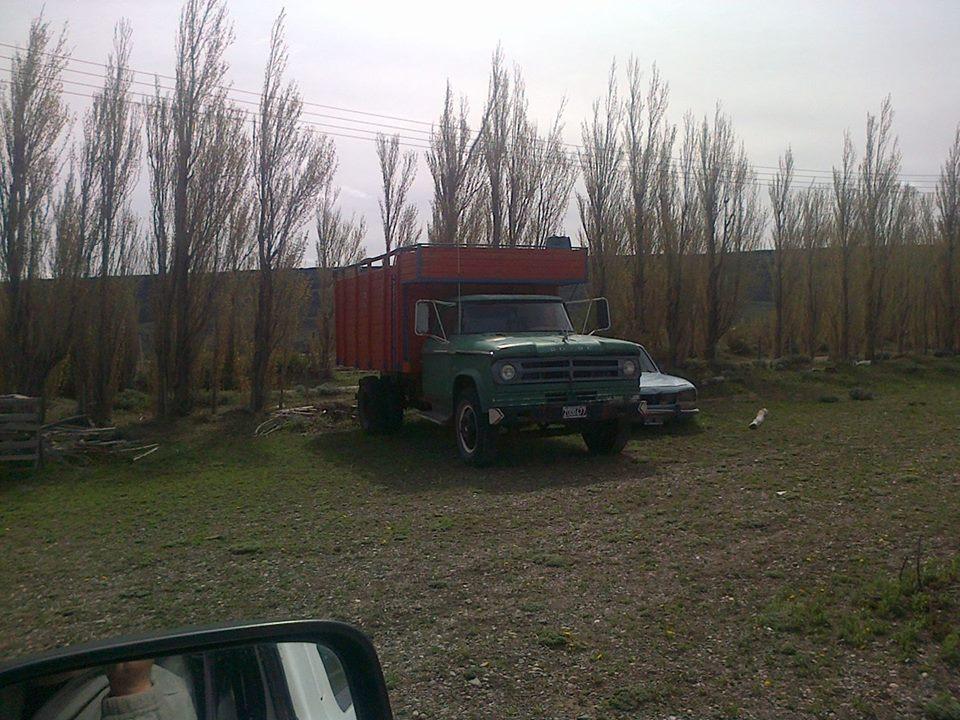 Dodge-Argentino