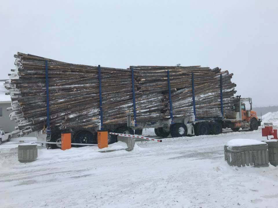 100-ton-hout-in-Canada-2