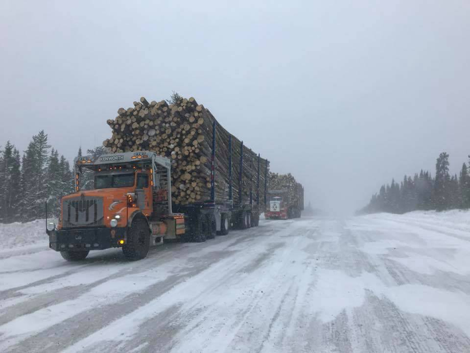 100-ton-hout-in-Canada-3