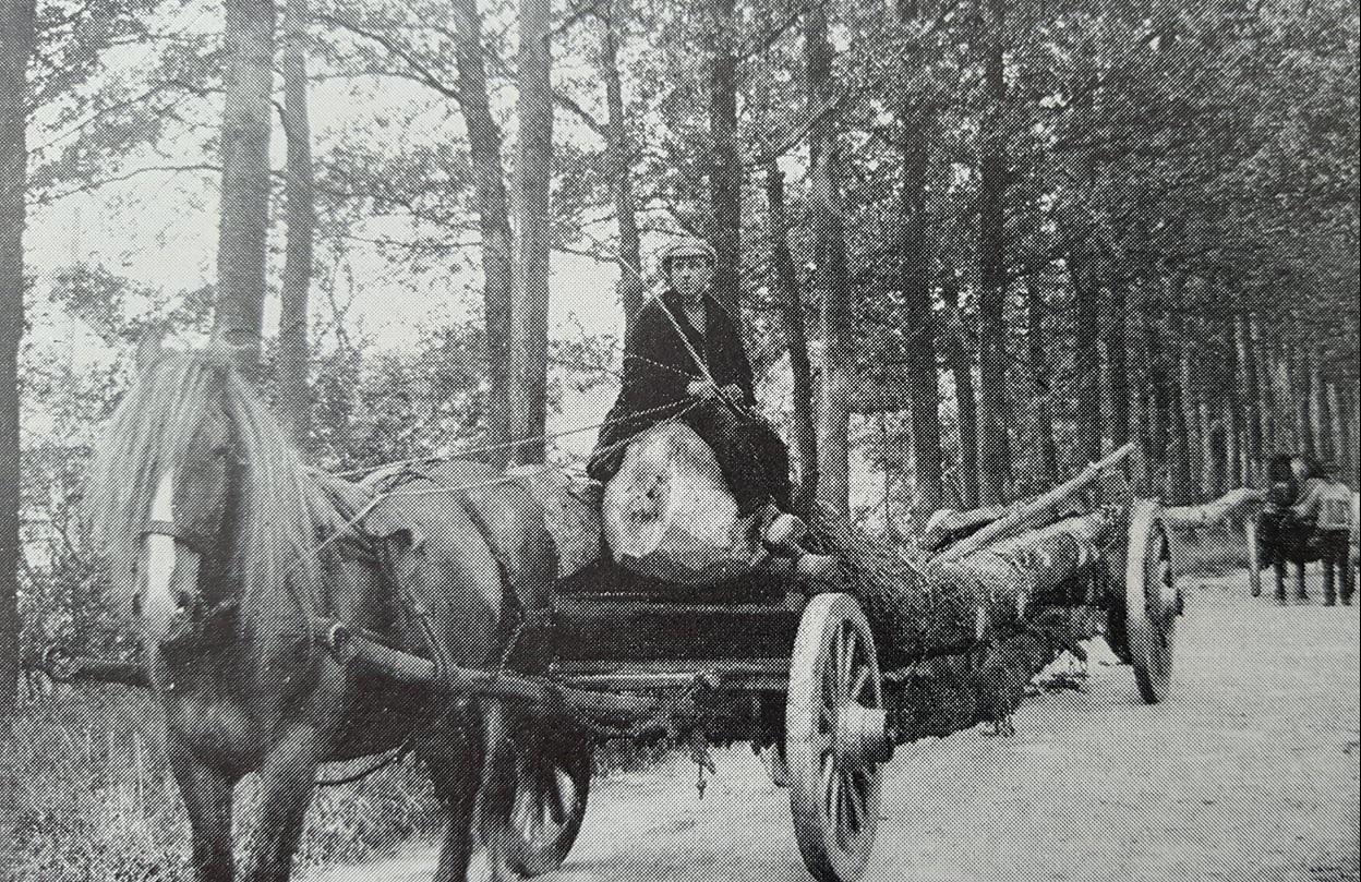 Bomen-transport