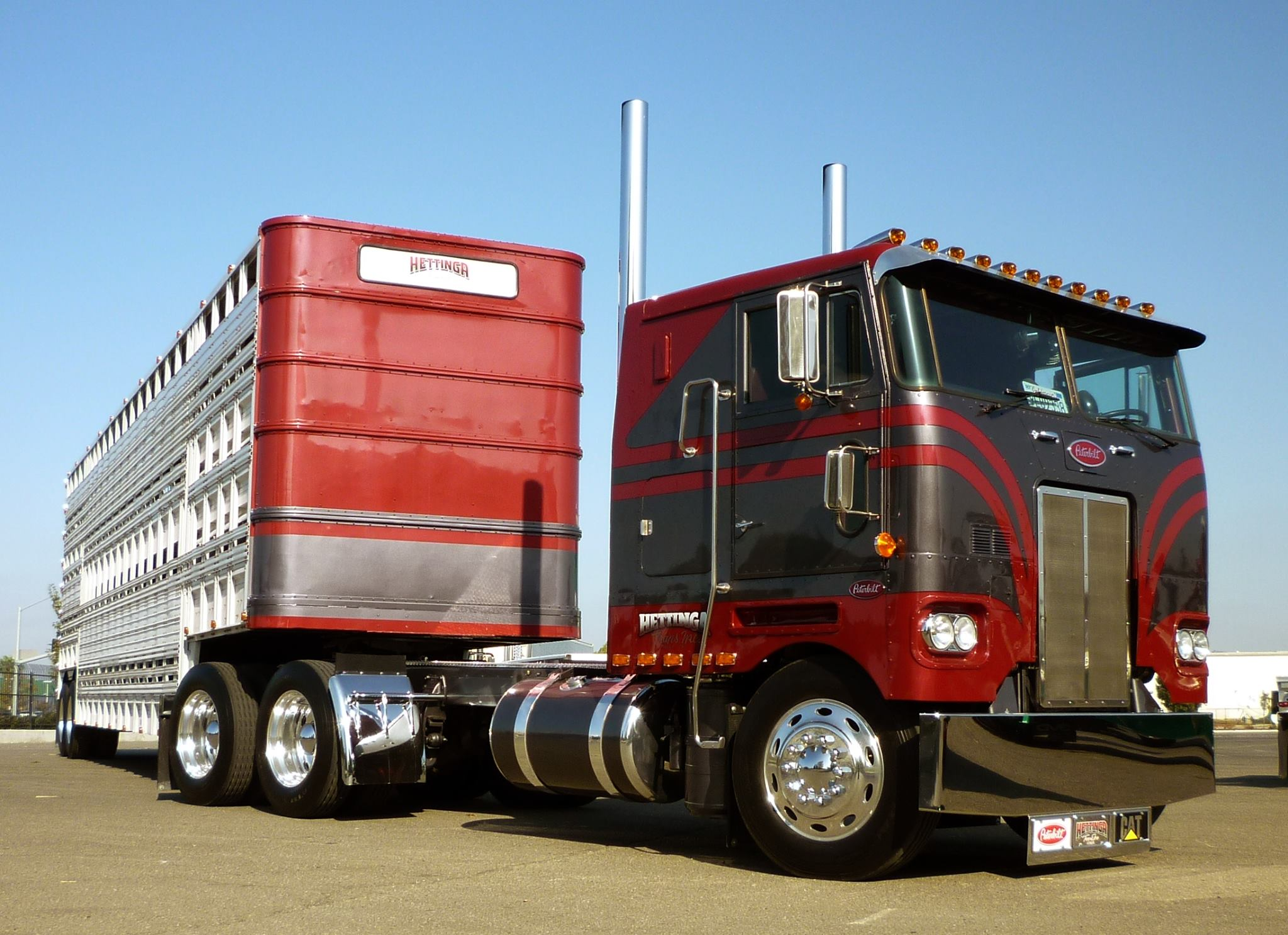 Peterbilt---352H-Haulin-a-cow-taxi