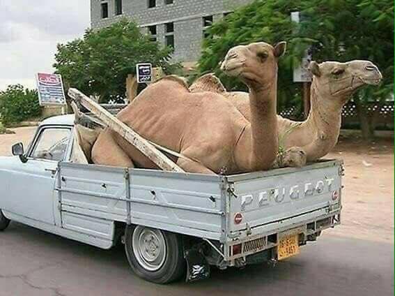 Peugeot-in-Maroc