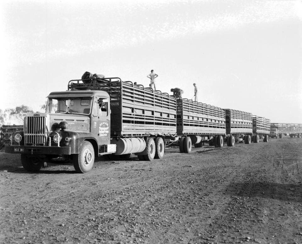 Road-Train-Buffalos-were-a-common-sight-in-the-1960-s---Diamantina-Transport-Winton---Hansen-Quilpie