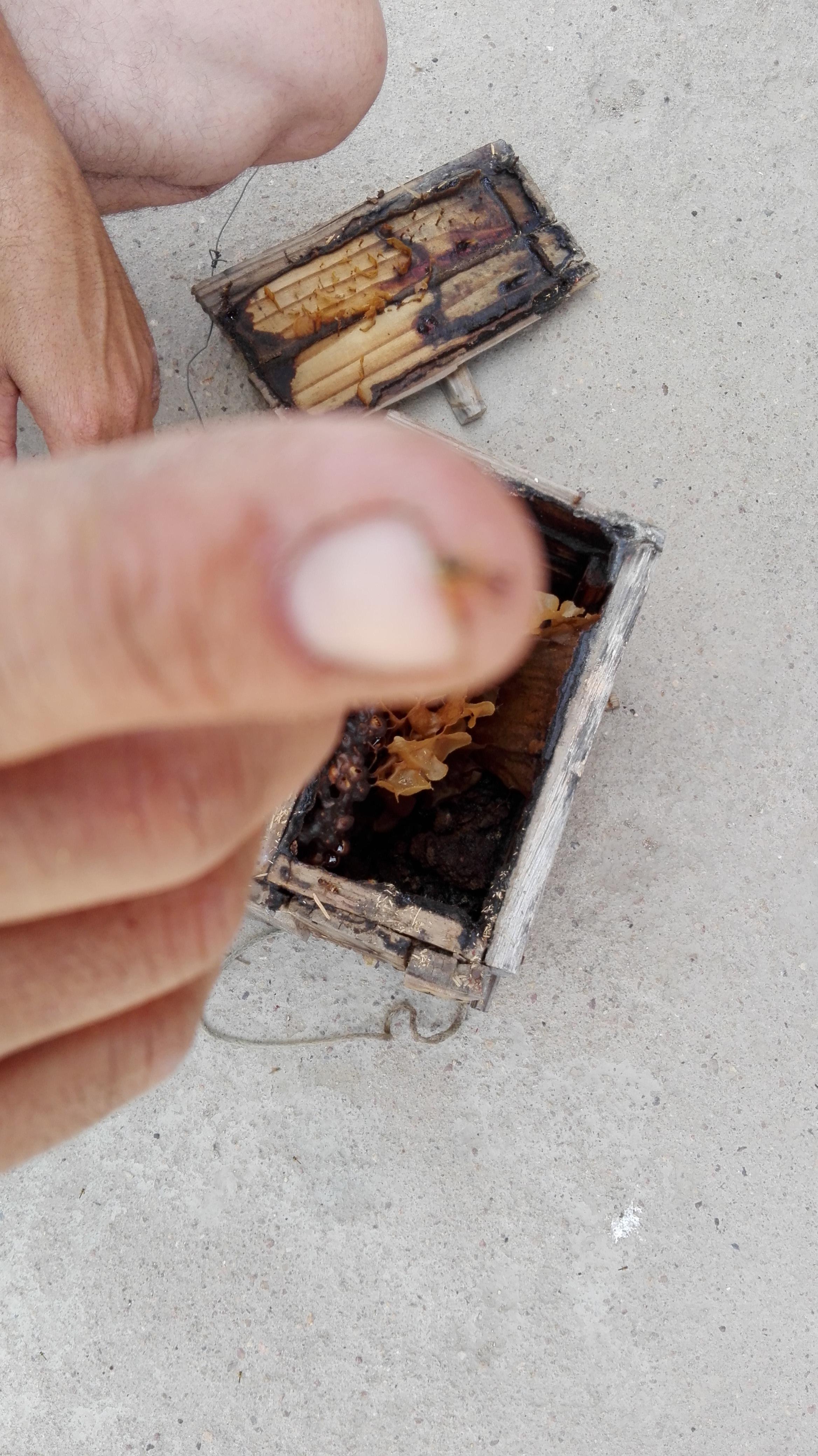 mini-bijen-die-niet-steken-en-enorme-afstanden-afleggen-met-wel-heerlijke-honing-4