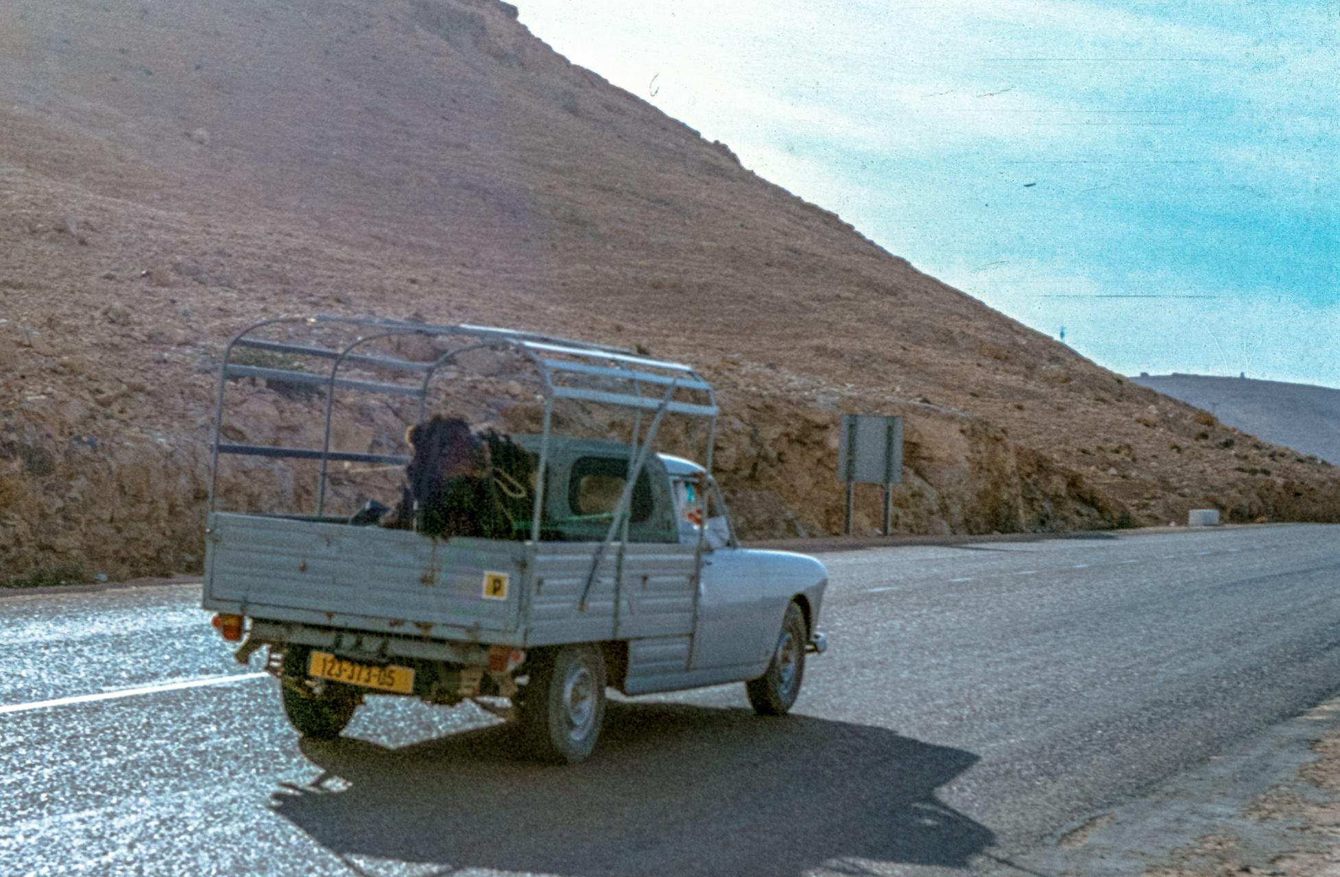 404-Live-transport-1978