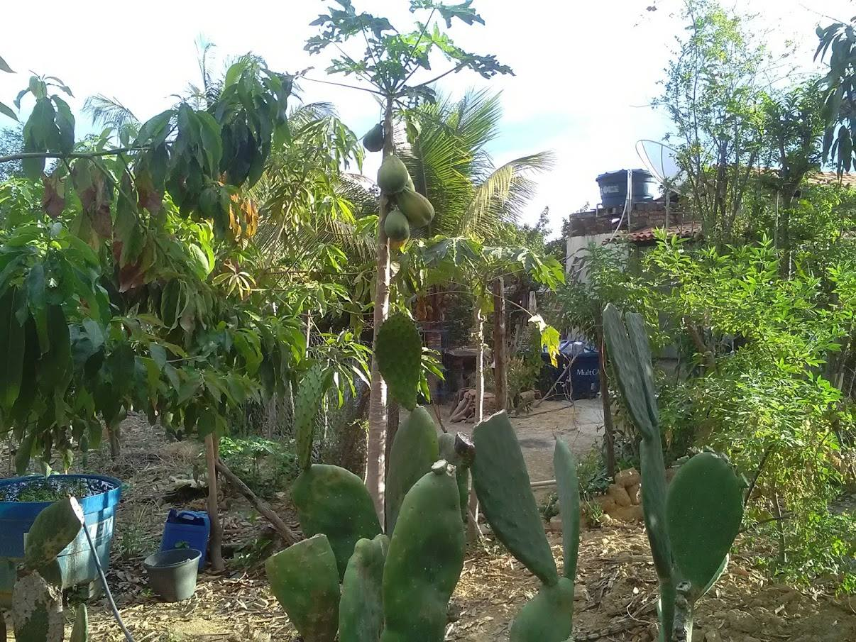 tuin-garden