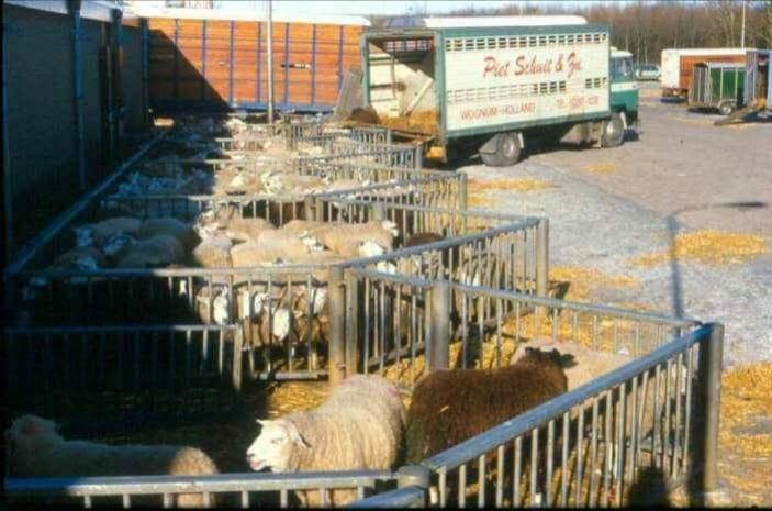 Weer-een-foto-uit-de-oude-doos--In-1975-op-de-veemarkt-in-Zwolle-