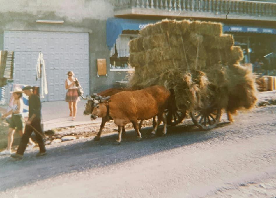 Jos-Janssen---Oud-Jugoslavie--Twee-Koeie-Kracht