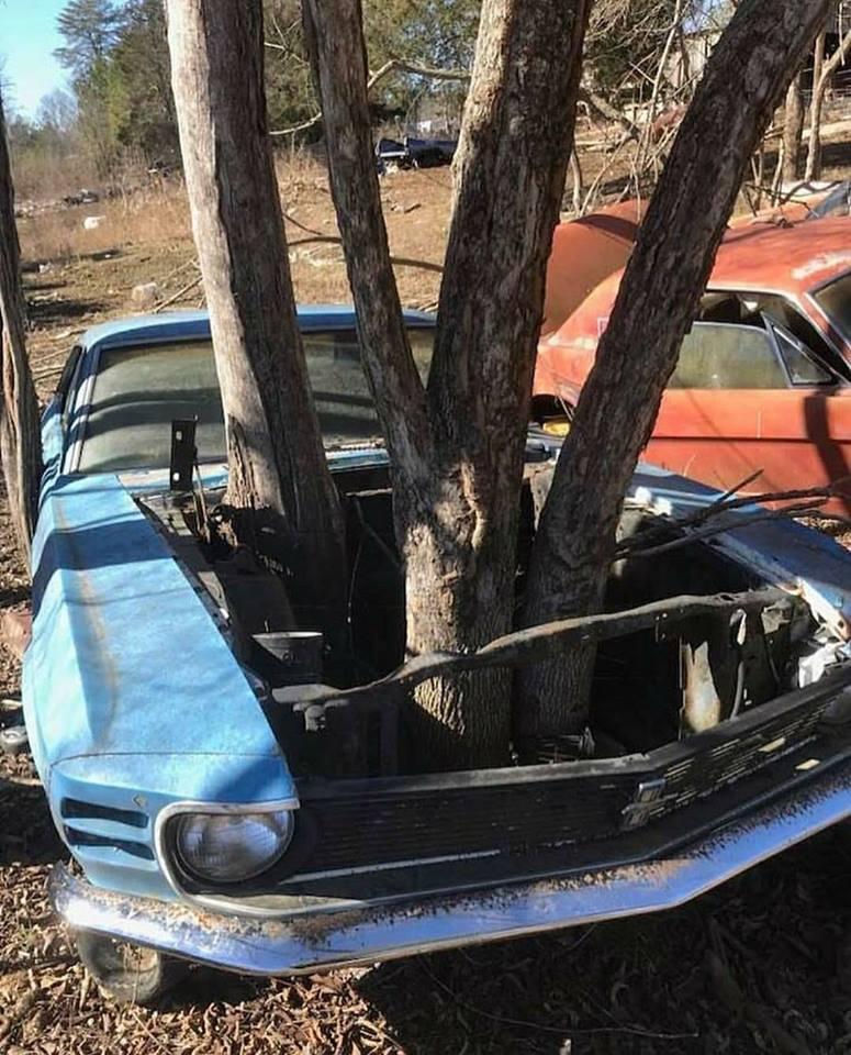 Garhart-Gerald-Stephenson-Carefully-remove-trees--Remove-Mustang