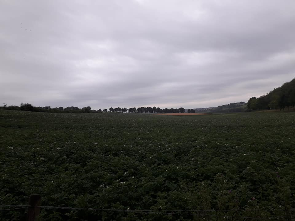 Rene--Colle-in-het-limburgse-landschap--2