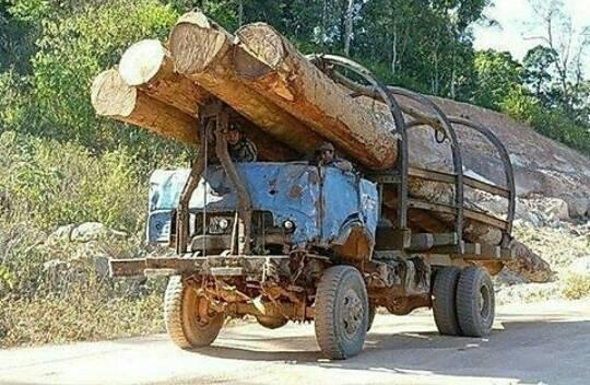 bomen-transport--1