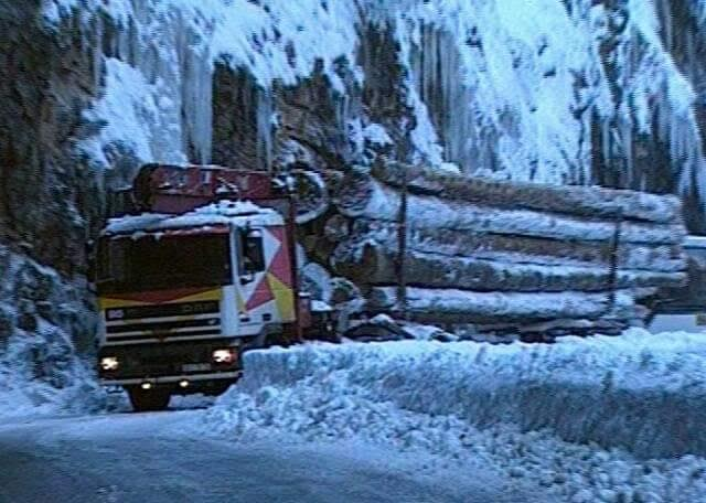 Daf-in-de-bomen-transport