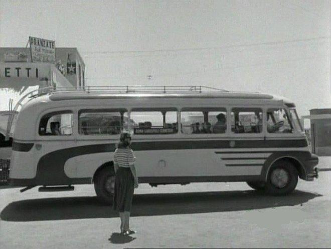 D-65--Busses