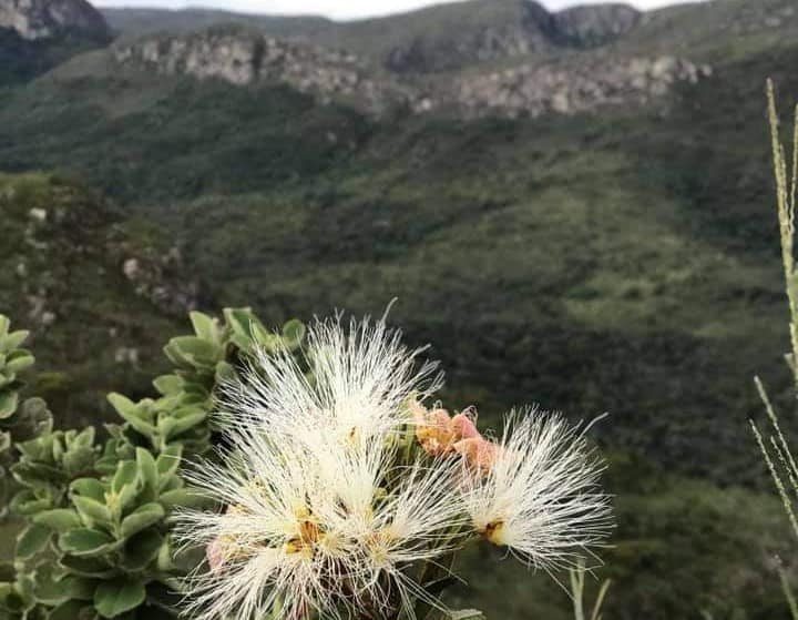 Omgeving-Ibitiara--(14)
