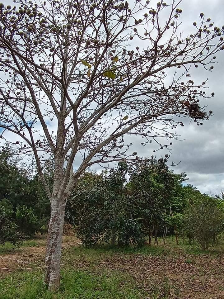 Omgeving-Ibitiara--(19)