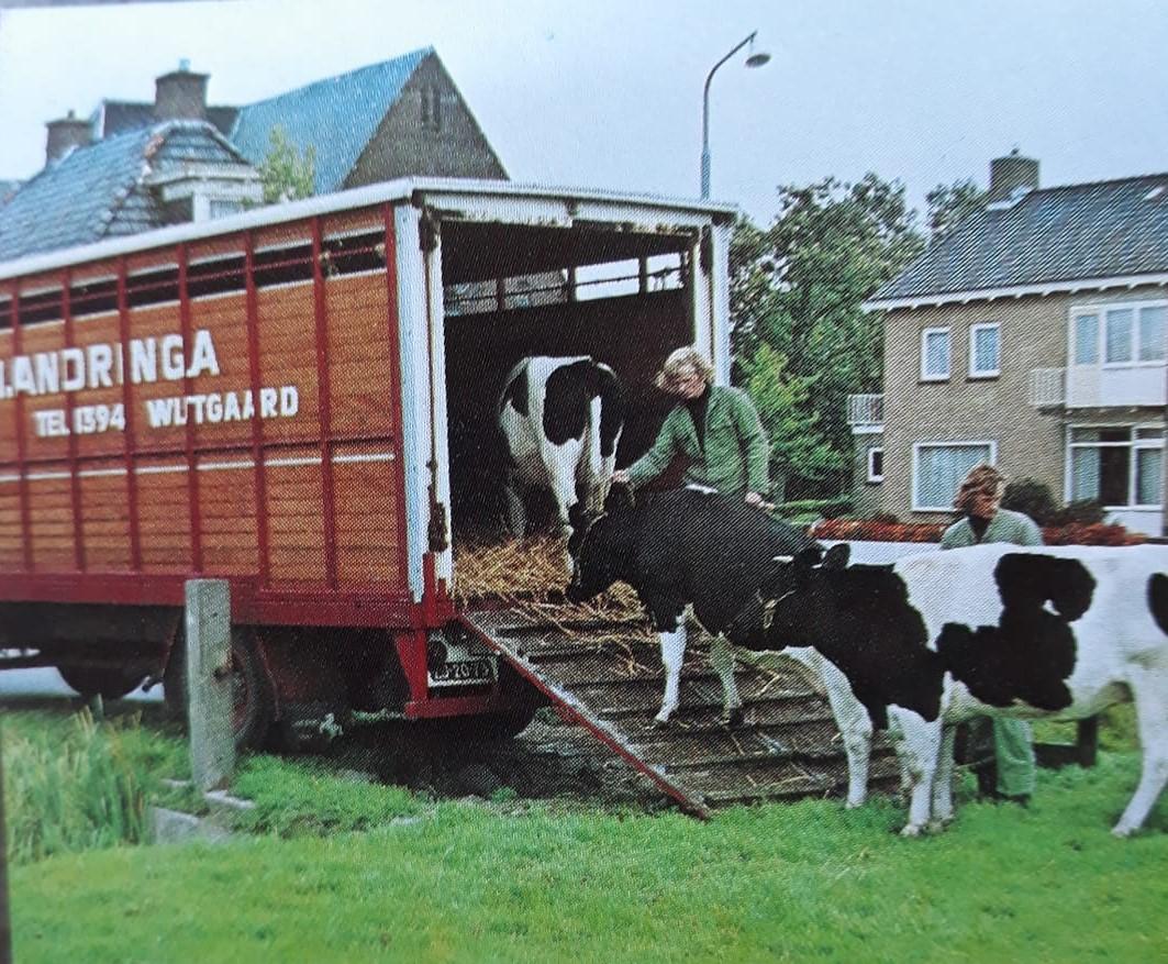 koeien-laden