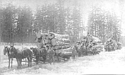 houttransport-van-het-verleden-en-heden--Uranus-De-Vialine--archive--(1)