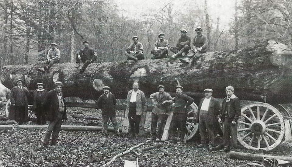 houttransport-van-het-verleden-en-heden--Uranus-De-Vialine--archive--(15)