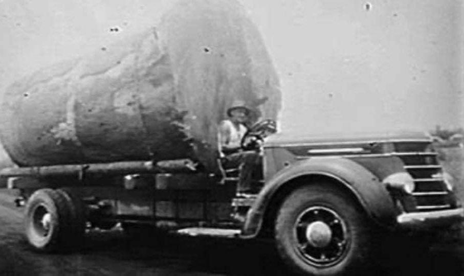 houttransport-van-het-verleden-en-heden--Uranus-De-Vialine--archive--(16)
