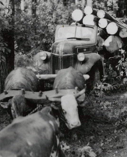 houttransport-van-het-verleden-en-heden--Uranus-De-Vialine--archive--(2)