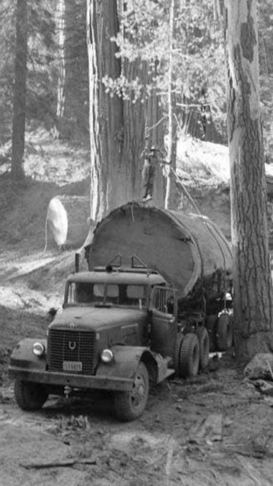 houttransport-van-het-verleden-en-heden--Uranus-De-Vialine--archive--(7)