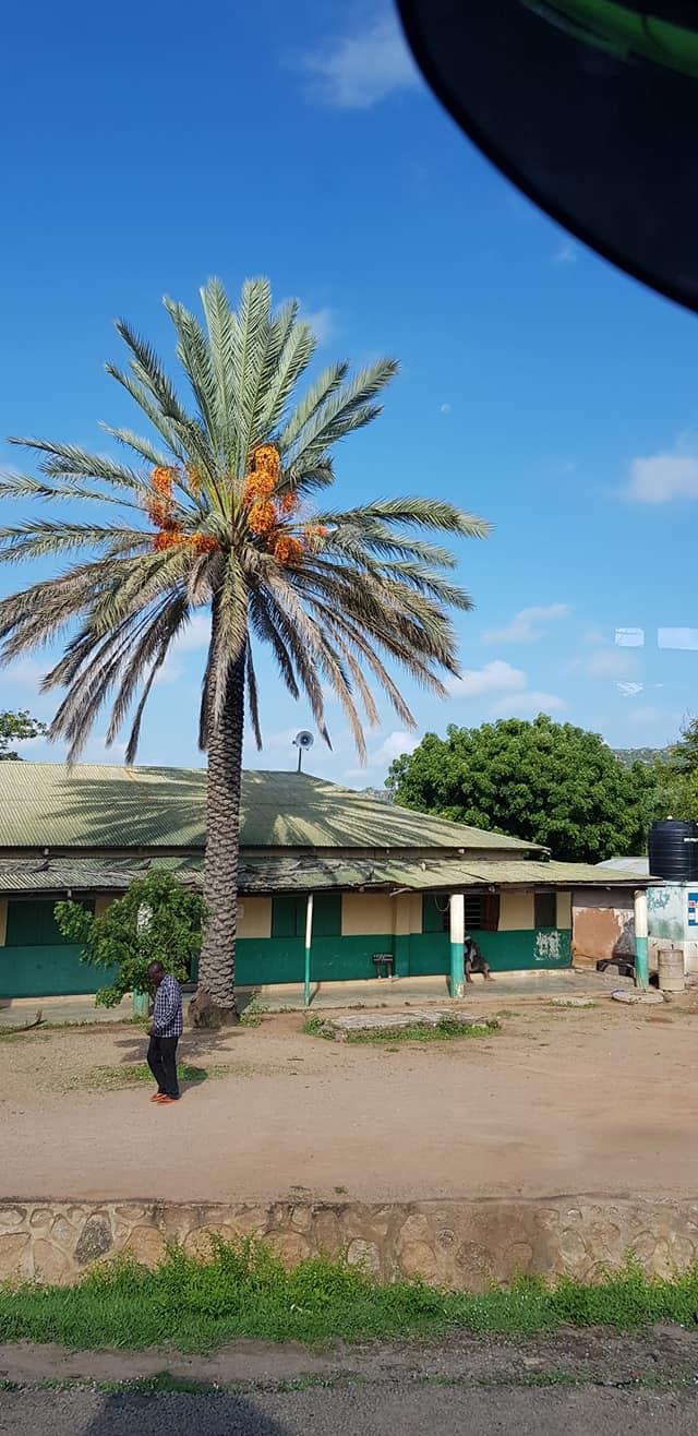 dag-2-Dar-es-Salaam-Kamplae-Els-Hondius-met-Mkhaleedy-Mwanja--6-12-20-(38)