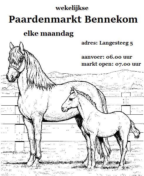 Paarden-Markt-(1)