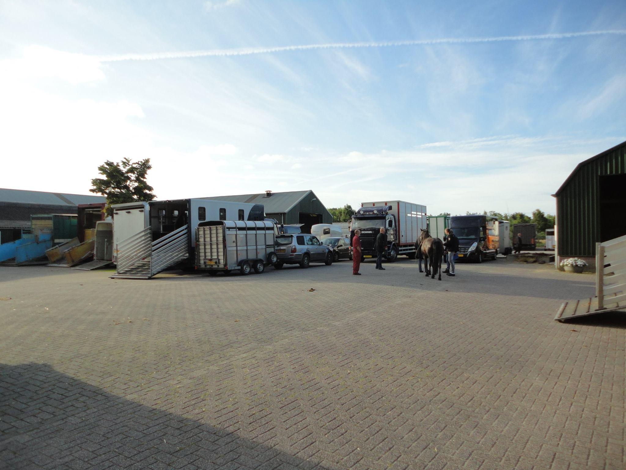 Paarden-Markt-(10)