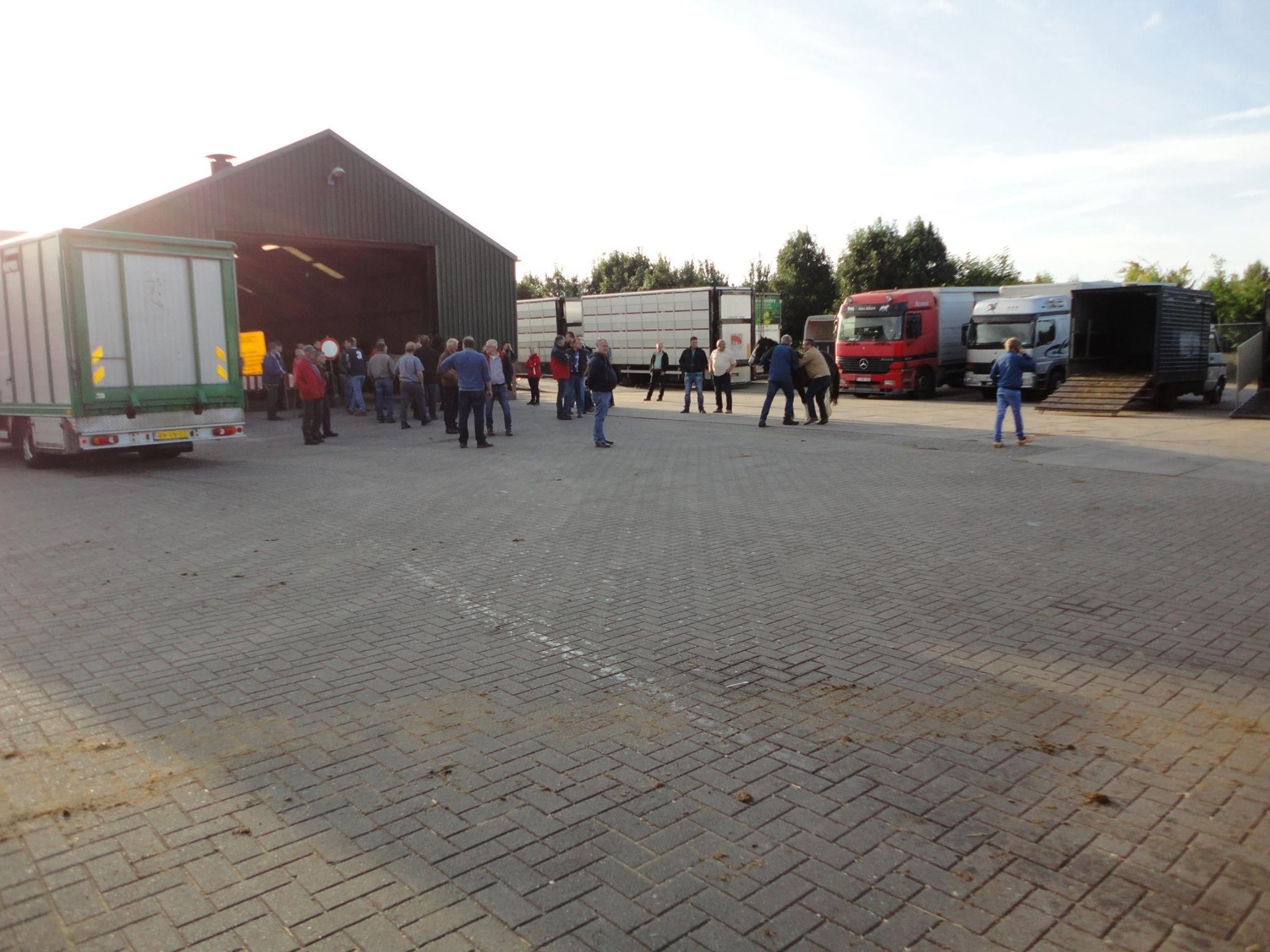 Paarden-Markt-(8)