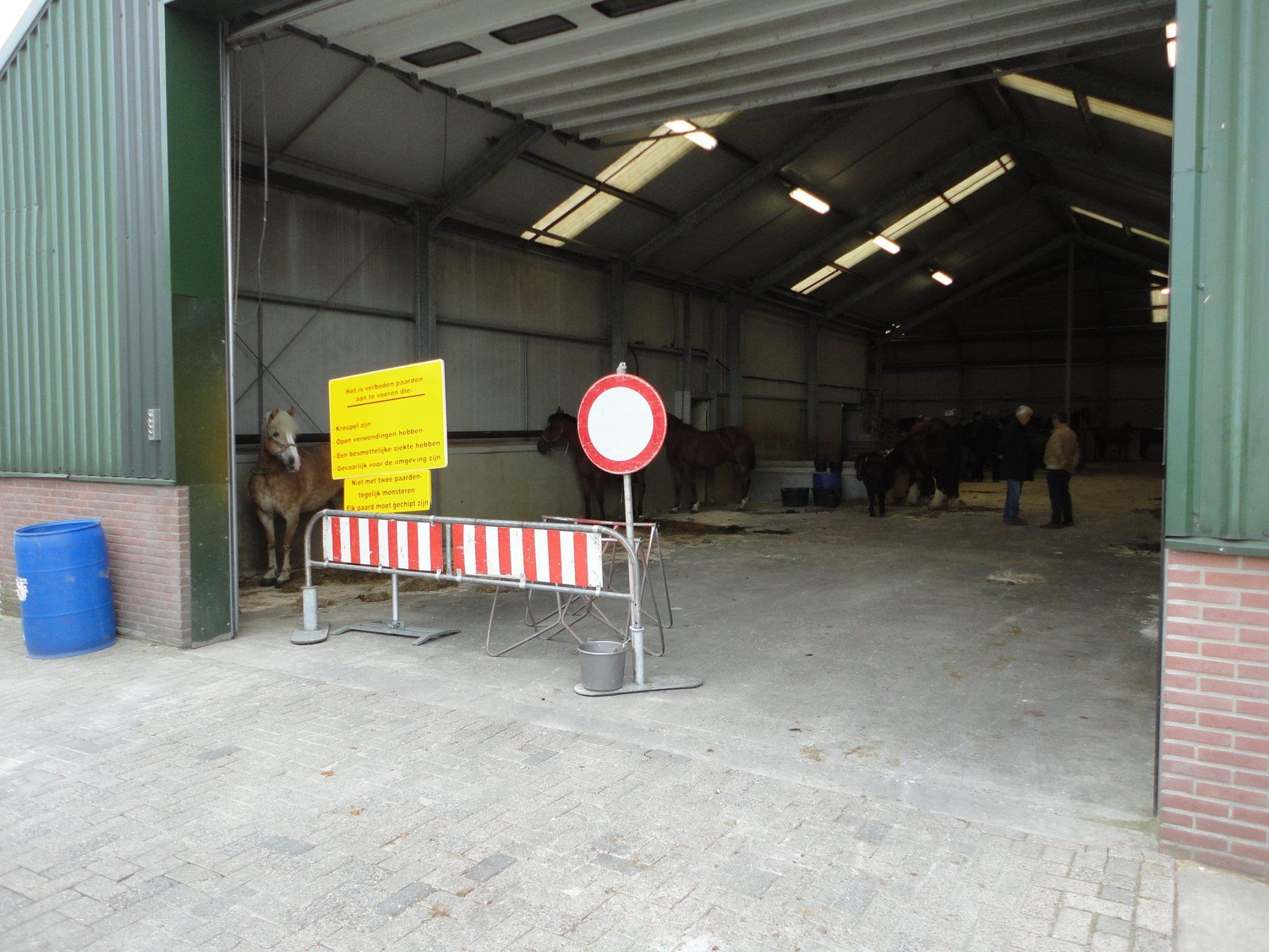 Paarden-Markt-(9)