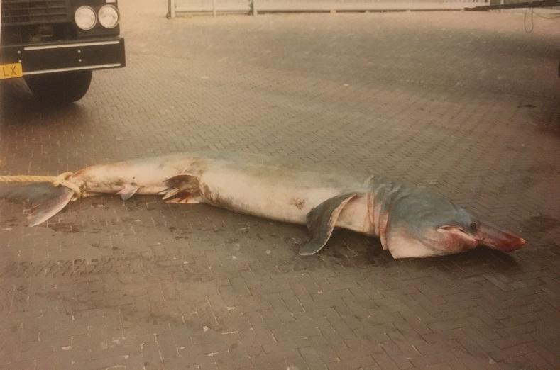 grote-vangst
