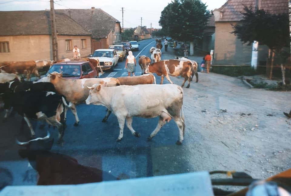 Chauffeur-Van-Beek-archief-zoon-Berry--Mijn-GROTE-voorbeeld-op-zijn-avonturen-naar-Griekenland-een-aantal-jaren-geleden--Hou-je-taai-Pa-zie-je-gauw-weer---(9)