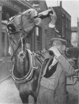 1955-het-paard-van-Dhr-Rogers-drinkt-een-pint