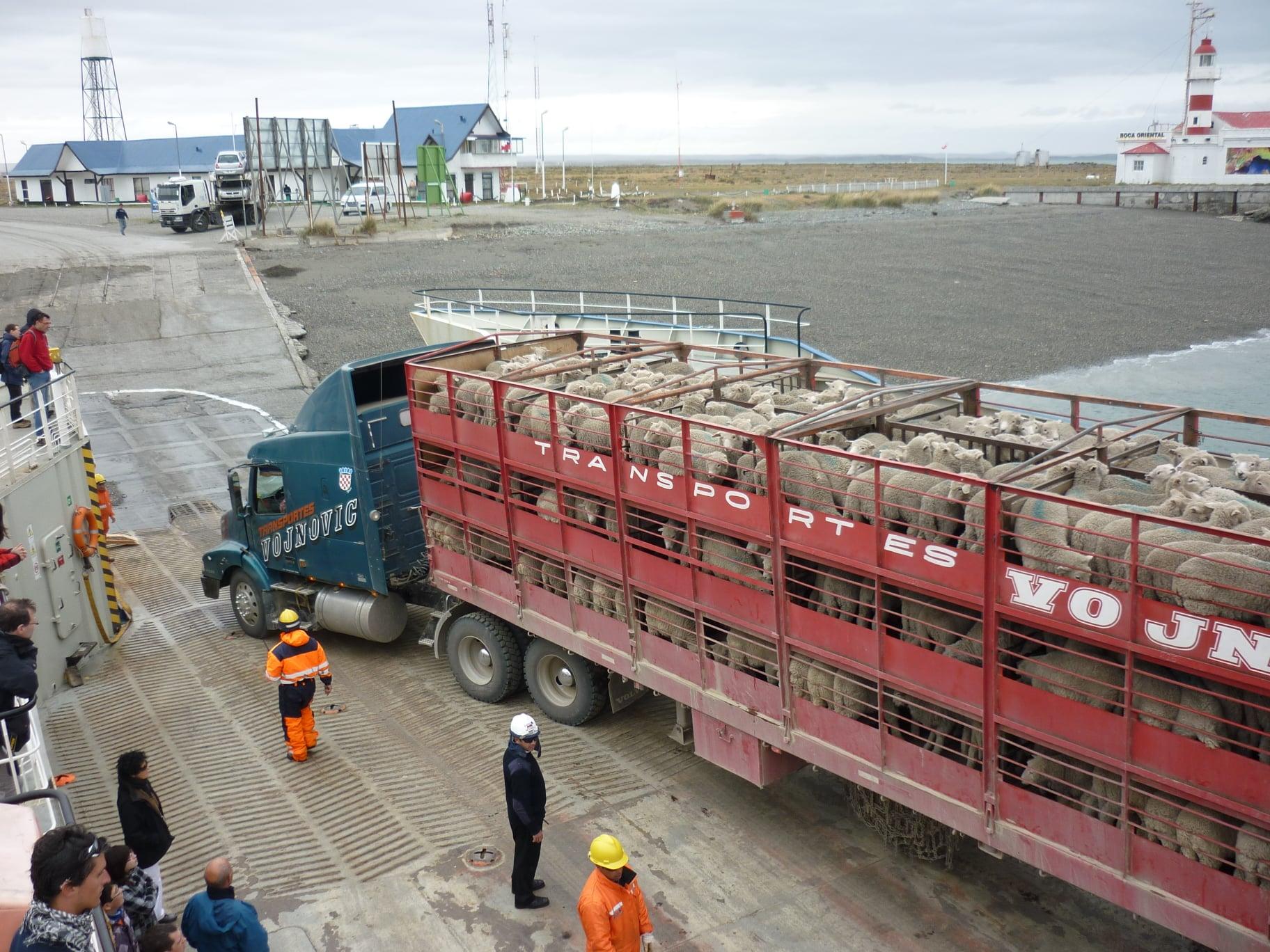 15-1-2021-Patagonie-Argentina-land-met-veel-schapen-Ferry-de-Straat-van-Magellan--Daniel-Caron-Photo-(2)