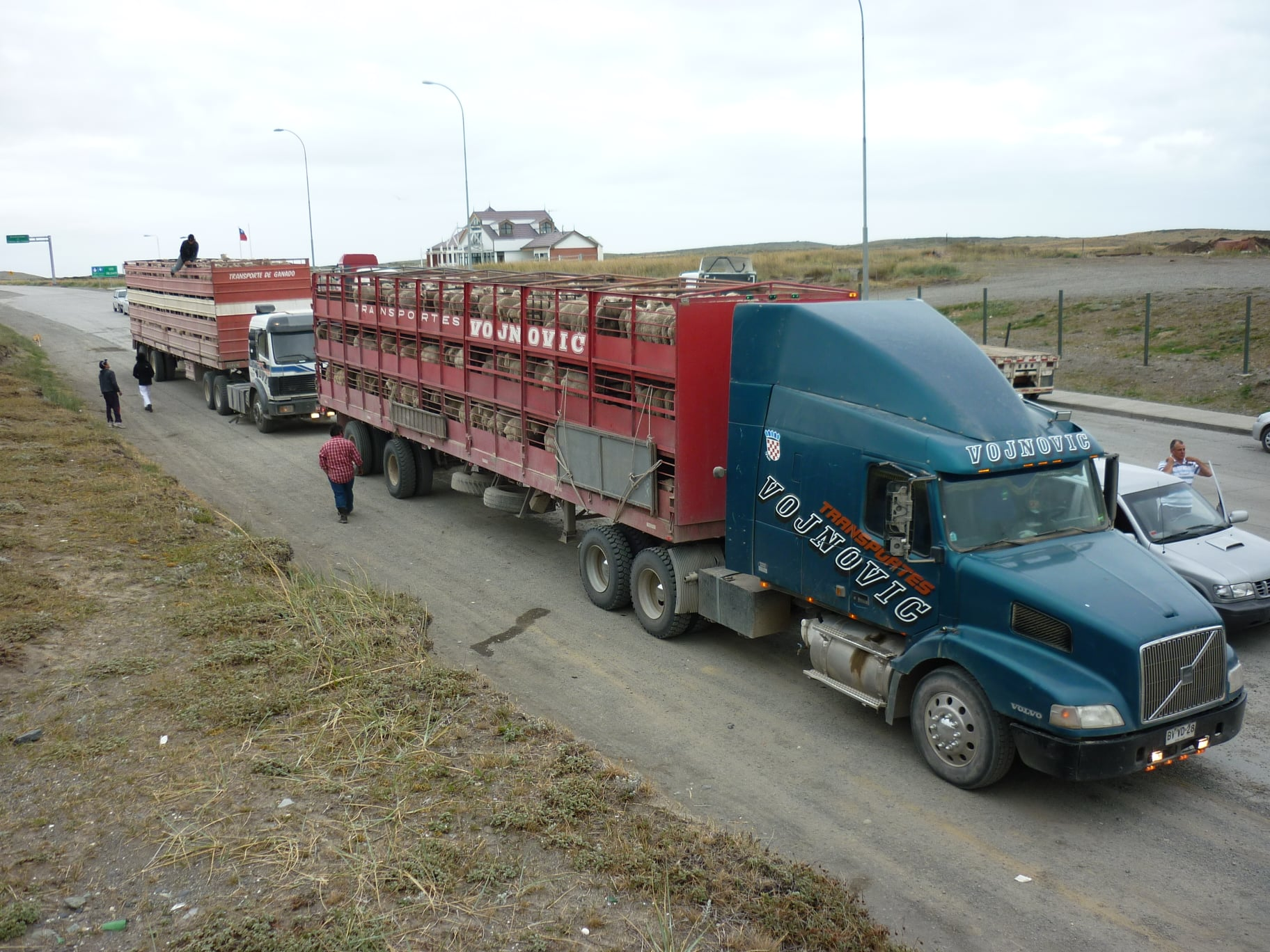 15-1-2021-Patagonie-Argentina-land-met-veel-schapen-Ferry-de-Straat-van-Magellan--Daniel-Caron-Photo-(3)