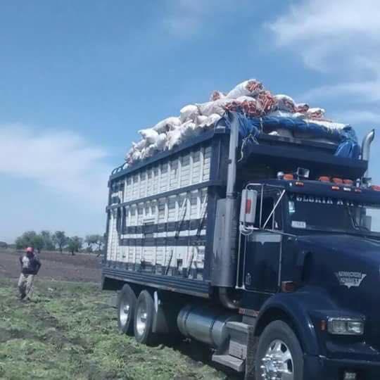Torton-de-todo-Mexico-101