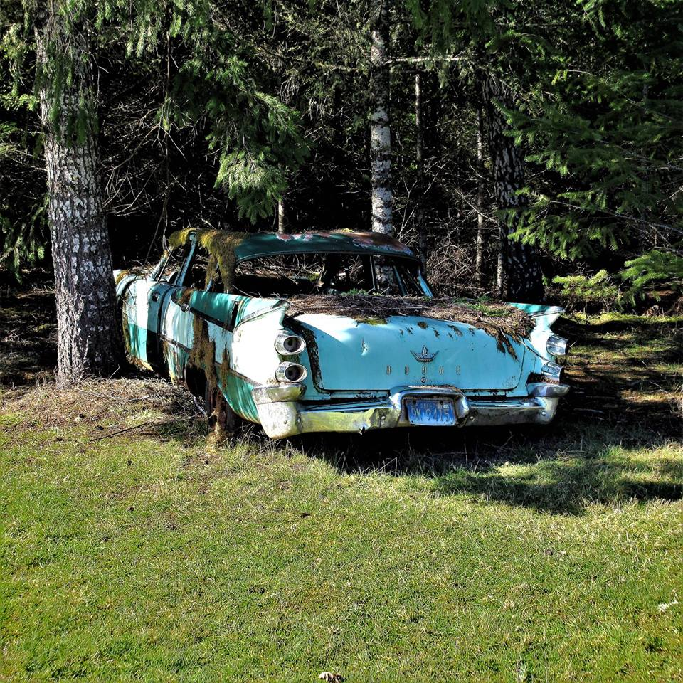 Dodge-1959-Darel-Maden-near-Carlton-Oregon-1