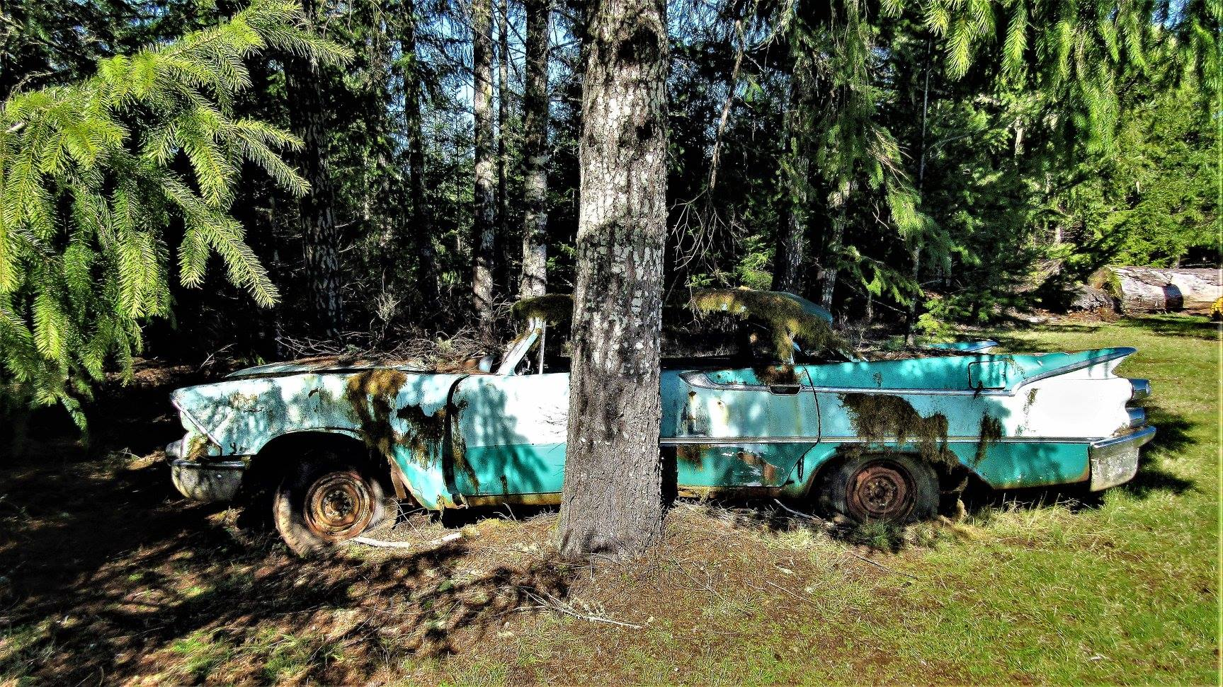 Dodge-1959-Darel-Maden-near-Carlton-Oregon-4[1]