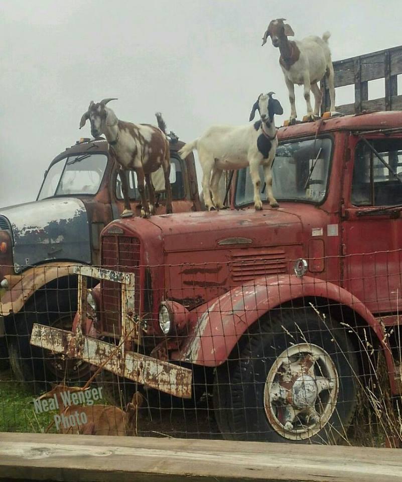 Brockway_Trucks-11
