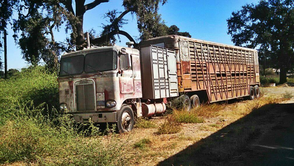 Livestock-Peterbilt