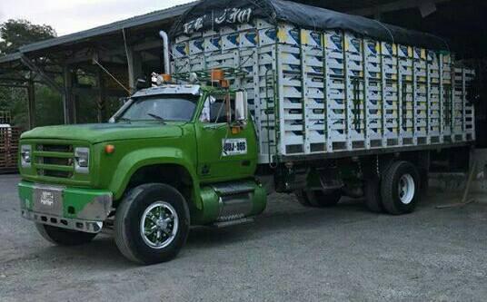 Camiones-Sencillo-Truck-Photo-22