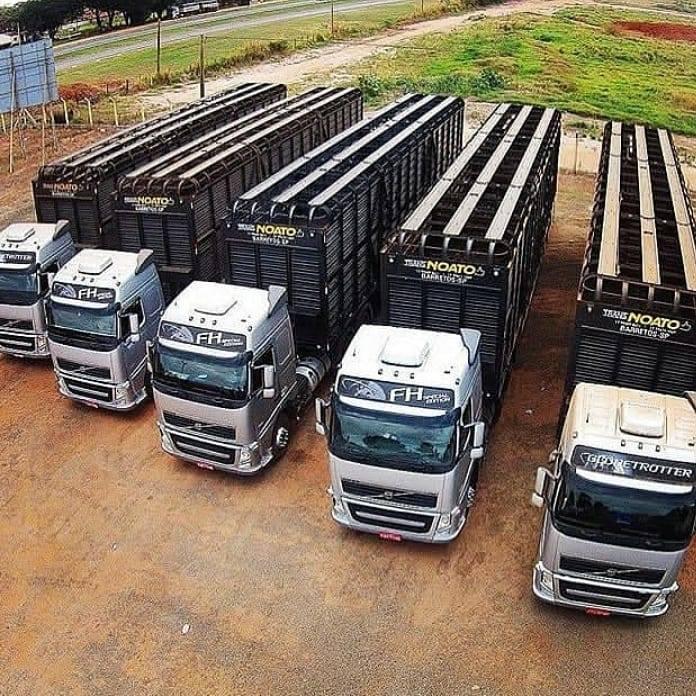 volvo-livestock-trucks