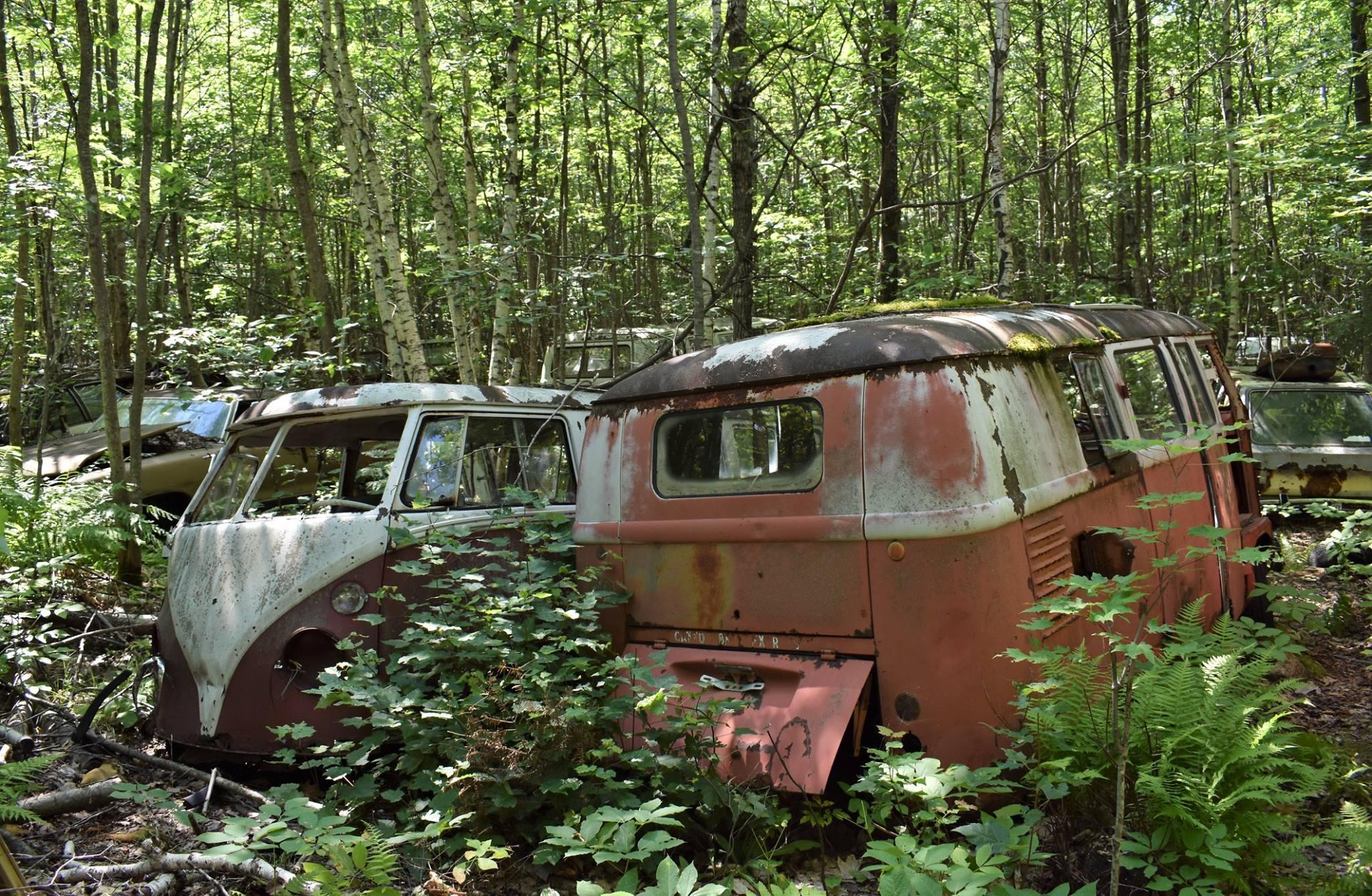 VW-Busses-