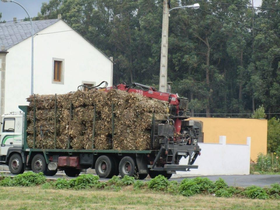 Madereros---Hout--trucks--35