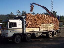 Madereros---Hout--trucks--38