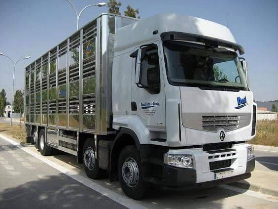 Ganaderos-Varkens-Camions--1