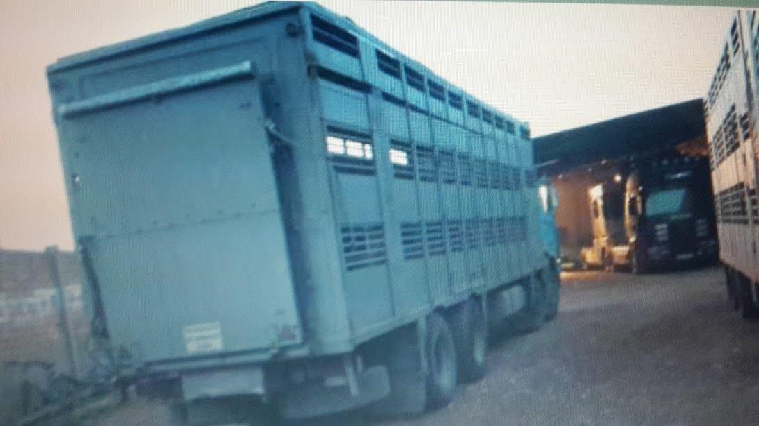 Ganaderos-Varkens-Camions--11